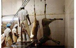 bulawayo abattoir