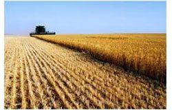commercial grain producers