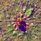 Petalilli Organic