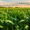 Agrolife Consultant