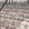 Theya Engineering Irrigation Zimbabwe