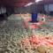 Nyatande Poultry Farms